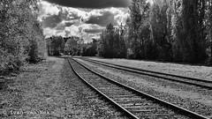 Emmerich am Rhein (Ivan van Nek) Tags: nikond7200 nikon d7200 gleis schienen rails spoorweg railroad eisenbahn chemindefer zwartwit monochrome blackandwhite bw duitsland allemagne germany deutschland 35mm nordrheinwestfalen