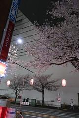 IMG_0544 (digitalbear) Tags: canon powershot g9x markii mark2 nakano dori sakura cherry blossom blooming fullbloom tokyo japan yozakura hanami
