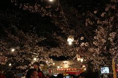 IMG_6418 Maruyama Koen (drayy) Tags: kyoto japan gion temple kiyomizudera maruyamakoen park sakura cherryblossoms 日本 京都 清水寺 円山公園 花見 桜