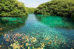 Tulum Casa Cenote blue
