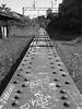 rv56a (daily observer) Tags: philadelphia readingviaduct abandonedrailroad abandonedphiladelphia railroad graffiti philadelphiagraffiti