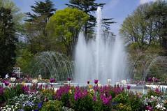 Balade toulousaine (PierreG_09) Tags: toulouse hautegaronne midipyrénées occitanie jardin parc jardindugrandrond grandrond jetdeau bassin