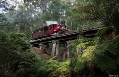 Wright Forest (Dobpics O'Brien) Tags: 861 billy pbr puffingbilly puffing pbps driver experience locomotive engine steam train rail railway railways victorian victoria vr wright bridge trestle