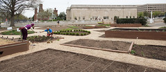 20170405-AMS-LSC-2071 (USDAgov) Tags: usda departmentofagriculture usdepartmentofagriculture peoplesgarden nationalmall washington dc planting seed sprout tools soil garden transplant plant align spring coolweather