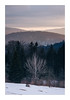 Untitled Image (Florin Aioanei) Tags: landscape purple sunset tree nature winter romania florin aioanei