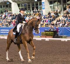 17429_Sydney_CDI_GPFS_0198.jpg (FranzVenhaus) Tags: athletes dressage australia equestrian riders horses ponies rug siec nsw sydney newsouthwales aus
