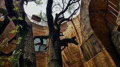EL QUE HA BUEN ÁRBOL SE ARRIMA, NADIE LO VE CUANDO ORINA. (FOTOS PARA PASAR EL RATO) Tags: ocre medieval árboles valquirico tlaxcalaméxico