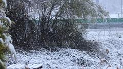 007 (Pablo Alvarez Corredera) Tags: nieve nevada frio barros felguera vega hielo mimosas cristales jardin casa flores