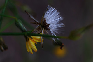 Flowers (Macro)