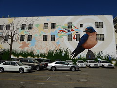 graffiti mural, San Francisco (duncan) Tags: graffitimural sanfrancisco graffiti mural bird