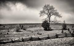 'Companions' (Canadapt) Tags: tree field pasture fence bush clouds bw farmland ontario canadapt