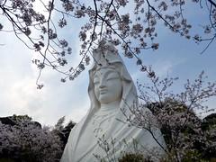 (Human-Faced Bun w/ Honey Pudding) Tags: sky blue tree cherry blossom pink green white cloud goddess huge big statue buddhist buddhism spring