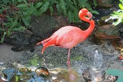 Key West (Florida) Trip 2016 2085Rif 4x6 (edgarandron - Busy!) Tags: florida keys floridakeys keywest butterflyhouse keywestbutterflyandnatureconservatory bird birds flamingo