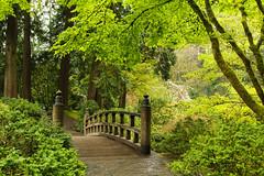 The Light (KC Mike D.) Tags: garden light path pathway bridge arched trees plants foliage