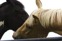 IMG_8364_01 (Sagrasa) Tags: churchilldowns kentucky horseracing thoroughbred