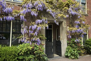 Entrance to an apartment building with a canopy of Wisteria