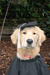 """Jaxon diploma • <a style=""""font-size:0.8em;"""" href=""""http://www.flickr.com/photos/95808399@N03/8758136485/"""" target=""""_blank"""">View on Flickr</a>"""
