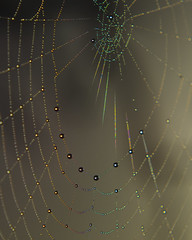 Spider's web (Indigo Skies Photography) Tags: lighting camera morning light colour macro digital rural lens photography photo dewdrops aperture nikon exposure flickr farm web australia victoria dew colourful spidersweb paddock echuca nikonafnikkor50mmf18 mitchellroad nikond7000 raychristy