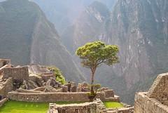 Prou, Machu Picchu. (Claudia Sc.) Tags: peru inca cit machupicchu sacredvalley prou vallesacre