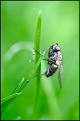 Reach for the Sky. (muddlemaker1967) Tags: macro nature grass garden fly nikon wildlife 100mm tokina atxm100afprod