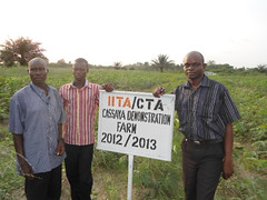 IITA/CTA cassava demonstration farm in Warri (IITA Image Library) Tags: training nigeria cassava warri demonstrationfarms manihotesculenta