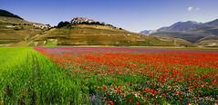 Gioia di colori (raffaphoto) Tags: paesaggio fioritura fiorituracastelluccio fioritura2013 castelluccio2013