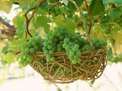 Grape-Fruit-Wallpaper (vinod_pednekar) Tags: