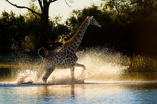 Botswana Okavango Delta Photo Safari 11