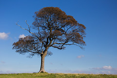 The Tree (juliereynoldsphotography) Tags: lymepark thetree canon6d juliereynolds juliereynoldsphotography