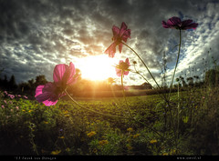 Cosmos' End (Frank van Dongen - slowing down) Tags: road pink blue autumn summer sky plant green fall topf25 grass clouds landscape weeds topf50 europe lego sony emo meadow police t
