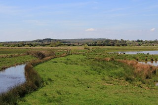 Pulborough Brooks RSPB West Sussex (15)