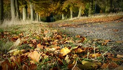 Autumn (april-mo) Tags: autumn france leaves deadleaves autumnleaves nord franceimage somain