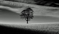 Black and White Highfields (AndyorDij) Tags: empingham england rutland uk 2013 tree silhouette blackandwhite monochrome andrewdejardin