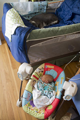 The baby and the poser (quinn.anya) Tags: baby cat sam swing newborn vitya packandplay vitty basinette