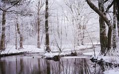 Crystal (Marie Granelli) Tags: winter snow reflection nature skne sweden sdersltt d3000