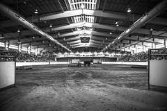 logging demo (Jen MacNeill) Tags: horses blackandwhite bw horse animal animals demo blackwhite pennsylvania farm logging arena demonstration pa harrisburg equine pafarmshow percheron farmshow 2014 jennifermacneilltraylor jmacneilltraylor jennifermacneill jennifermacneillphotography