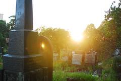 Gore Hill Cemetery (kelliejane) Tags: history public overgrown cemetery grave graveyard sunrise death weeds nikon closed cross sydney headstones australia graves historic nsw gravestone tombstones gravestones overgrowth gorehill gorehillcemetery kelliejane visitnsw kelliejanesydneynswaustralia northernmetropolitancemeteriestrust
