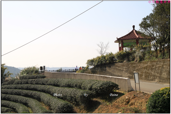 龍潭三水茗園 (8).JPG