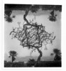 Two trees (guido.masi) Tags: blackandwhite tree darkroom print florence doubleexposure firenze albero flo biancoenero doppiaesposizione stampa cameraoscura guidomasi