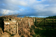 An Irish Image (Andy G 450D) Tags: trees ireland sky irish green grass stone wall clouds forest fence landscape moss gate iron post bright stones pillar gap bluesky hedge brambles donegal