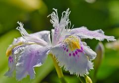 Nice day to be a Flower. (Omygodtom) Tags: usa flower macro art texture nature oregon nikon dof bokeh pov tamron90mm naturelovers simpleflowers d7000