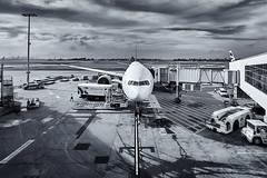 Airport. (Bill Thoo) Tags: airport plane jet sydney nsw newsouthwales australia urban city monochrome blackandwhite travel transport sony a7rii samyang 14mm