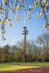 Spring at the Euromast Rotterdam (Charlene van Koesveld) Tags: spring springtime euromast euromastpark park rotterdam blossom bloom tulips tulip flowers trees grass garden zuidholland southholland touristattraction tourism travel tower holland netherlands nederland dutch flora branch bluesky sunny nikon grassland pastel colorful colors nature landscape