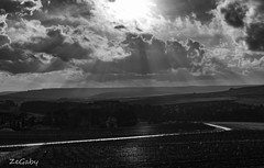 From the sun (ZeGaby) Tags: blackandwhite champagne landscape pentax35mm pentaxk1 pixelshift vineyards tauxièresmutry grandest france fr
