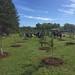 Highland_Renaissance_Tree_Planting_Event_2017 (67)