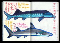 2017.03.18-05 (タケウマ) Tags: sketch sketchbook studiotakeuma doodle drawing illustration illustrator pen aquarium 須磨海浜水族公園 水族館 fish art