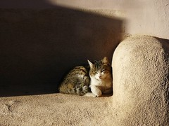 Catnap, Old Town Albuquerque (honestys_easy) Tags: nm newmexico astromony verylargearray satellite science socorro signs albuquerque oldtown cats