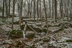 Winter (Paul B0udreau) Tags: nikkor1855mm photoshop canada ontario brucetrail woods hiking winter snow nature paulboudreauphotography niagara d5100 nikon nikond5100 raw layer