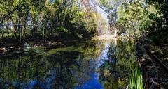 back yard pond (JoelDeluxe) Tags: florafaunafarm flora fauna farms southvalley nm newmexico davis house ducks pond walnuts elms bees fields sheep goats joeldeluxe