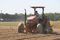 Peanut Planting 5 (UGA College of Ag & Environmental Sciences - OCCS) Tags: uga tifton campus peanuts planting
